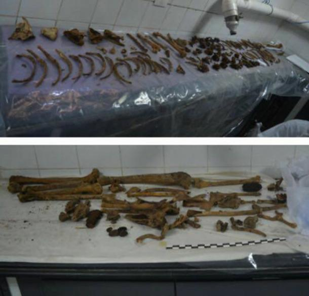 Bones recovered from the black sarcophagus have now been recorded and undergone preliminary examination. (Image: Ministry of Antiquities)
