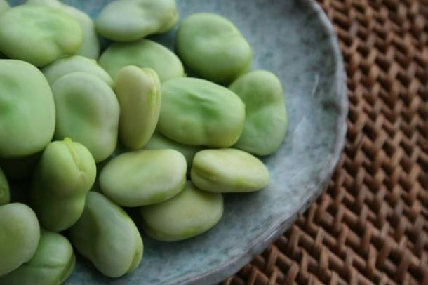 Broad beans are known for their hallucinogenic properties when eaten in their green state (public domain)