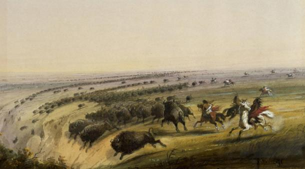 Buffalo being chased off a cliff as seen and painted by Alfred Jacob Miller in the late 19th-century.