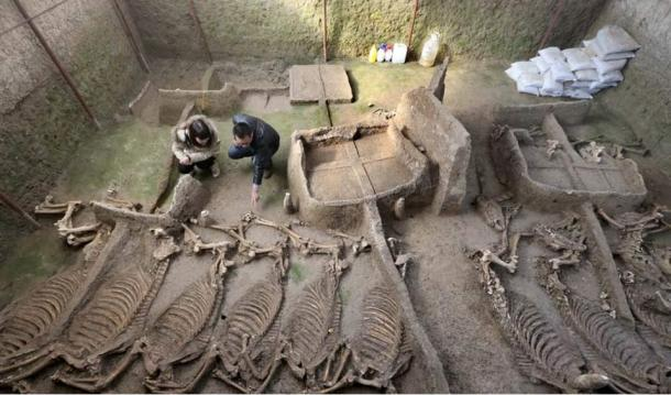 Burial pit found last week containing 13 complete horse skeletons.