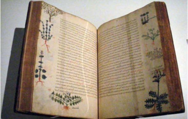 A 15th century Byzantine copy of De Materia Medica by the ancient Greek doctor Dioscorides that mentions Rhodiola rosea as beneficial.