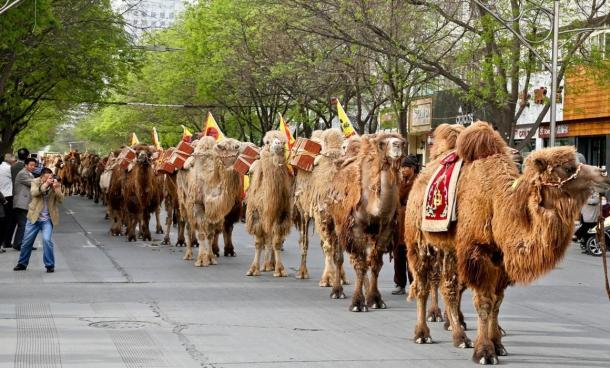 Camels and tea merchants travel through the streets of Zhangye as they retrace the ancient Silk Road route to Kazakhstan.