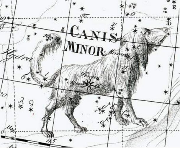 19th century illustration of Canis Minor
