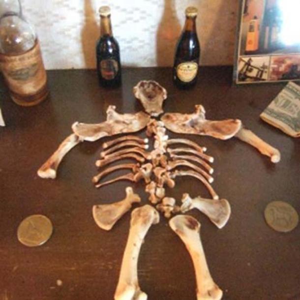 The Carlingford Leprechaun bones.