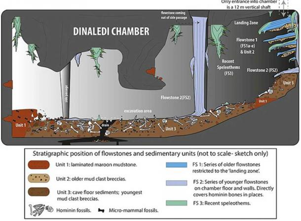 Cartoon illustrating the geological and taphonomic context and distribution of fossils, sediments and flowstones within the Dinaledi Chamber, where H. naledi bones were excavated.