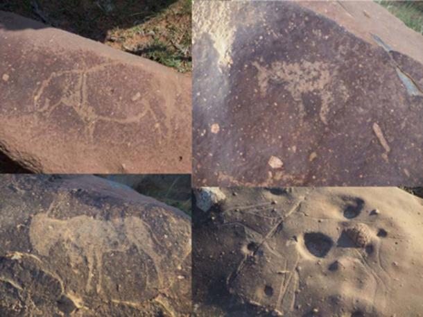 Carvings of hippopotamus, horses, and antelopes in the Vredefort impact crater. (Dr. Matthew Huber / University of the Free State)