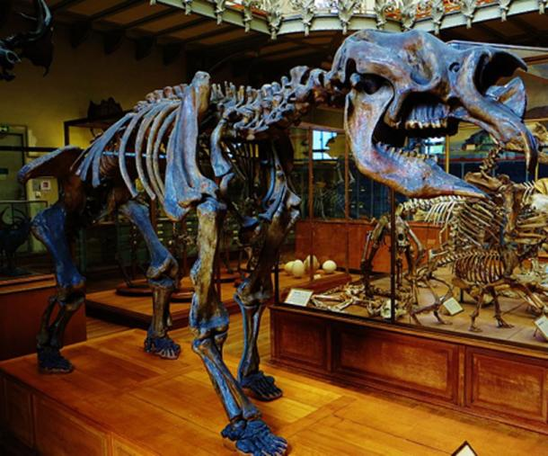 Cast of a Diprotodon skeleton on exhibit at the Gallery of Paleontology and Comparative Anatomy of the French National Museum of Natural History, in the Jardin des plantes, Paris. (Ghedoghedo/CC BY SA 3.0)