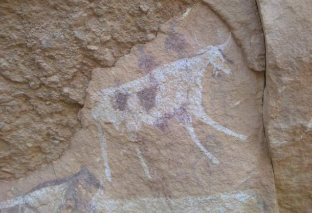 Cattle depicted in Sahara Desert cave paintings at Gebel el Uweinat, southwestern Egypt