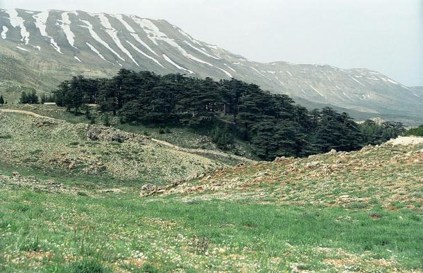 """Early translators of the Epic assumed that the """"Cedar Forest"""" refers to the Lebanon Cedars. A Cedar Forest in Lebanon"""