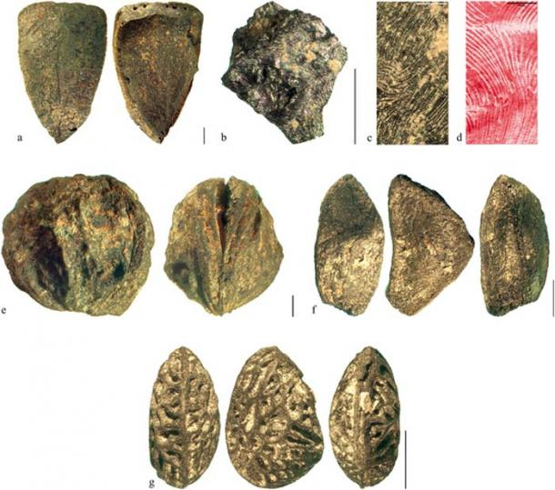 Charred remains of wild edible fruit plants from the Prigglitz-Gasteil Bronze Age mining camp including hazel nuts, crab apples and berries. (A. G. Heiss et al. / PLOS ONE)