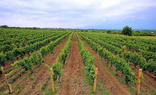 Chateau Zegaani Vineyards in Akhasheni, Georgia