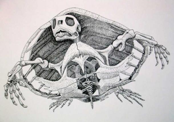 Chelonioidea sea turtle. Author provided.