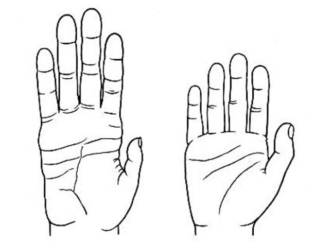 Chimpanzee hand, at left, and human hand, right.