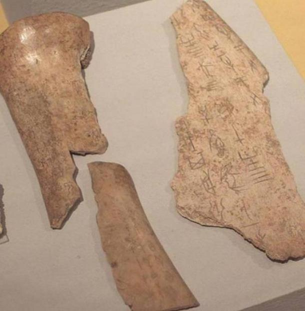 Chinese Oracle Bones, Shang Dynasty Linden-Museum, Stuttgart (Germany).