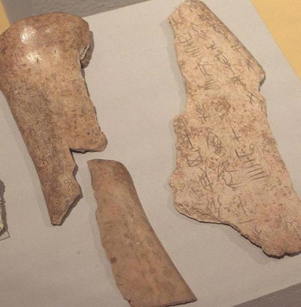 Chinese Oracle Bones, Shang Dynasty Linden-Museum, Stuttgart