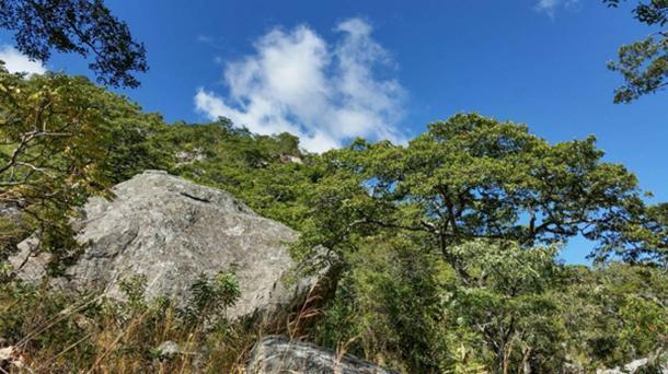 Chongoni Forest (Steward, P / CC BY NC 2.0)