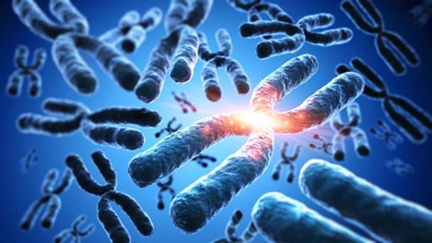 Chromosomes. (peterschreiber.media / Adobe)