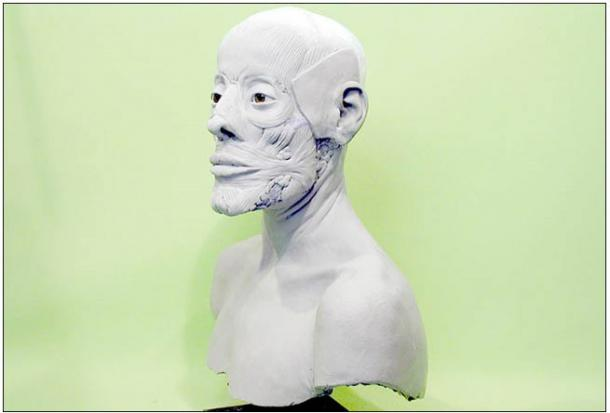 Clay reconstruction by Swiss expert Marcel Nyffenegger