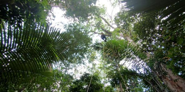 Climbing an Amazonian tree. (Inverse)