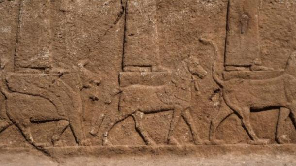 Close up of the Assyrian relief carvings showing some of the gods and goddesses standing or seated on a mythical creature. (Alberto Savioli / Land of Nineveh Archaeological Project / University of Udine)