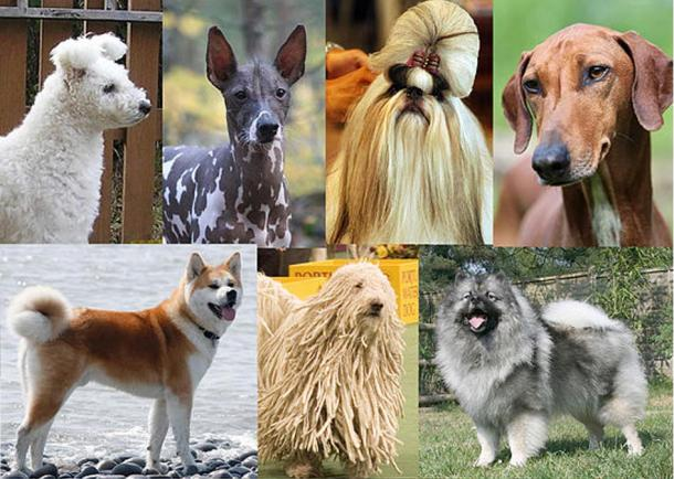 A Collage of dogs.