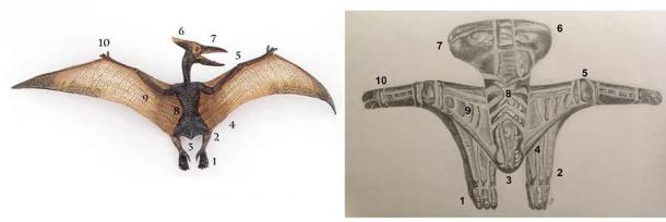 Comparison of stylized pterodactyl from a Tami bowl to an anatomical model. Artistic rendition of Siassi Bowl motif from Oceanic Arts Australia. (Oceanic Arts Australia)