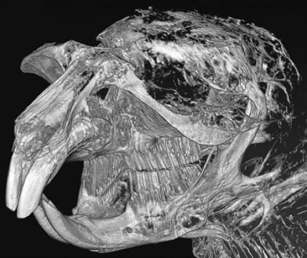 Computer model of the anterior part of the skull. Picture: Alexey Lopatin et al.