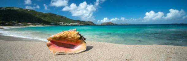 Conch shell of the Caribbean (forcdan/ Adobe Stock)