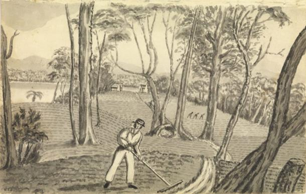 Convicts at work turning the Australian bush into a tamed cultivated field. (Allport Library and Museum of Fine Arts, Tasmania Archive and Heritage Office / Author provided)