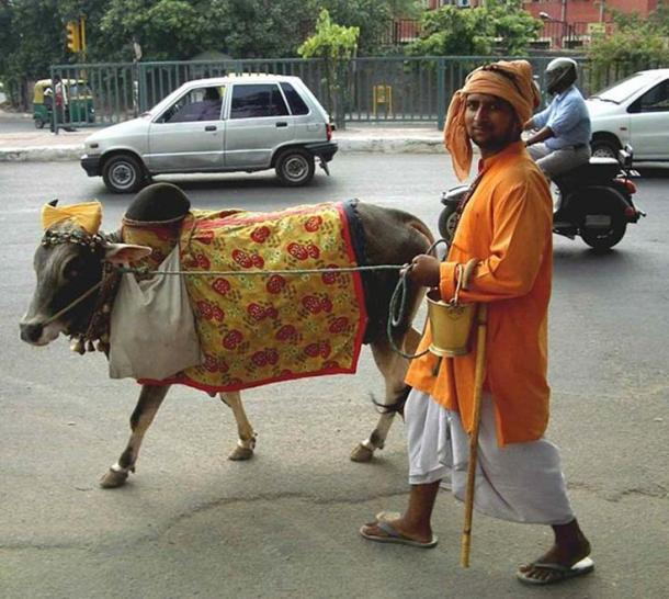 Cow on Delhi street.