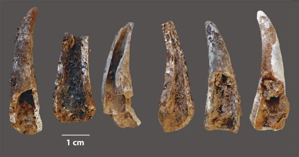 Cracked-open and burnt fragments of pincers of the edible crab (cancer pagurus) found at the Figueira Brava cave, showing evidence of the Neanderthals' seafood diet. (João Zilhão / University of Barcelona)