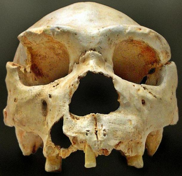 """Cranium 5"""" is one of the most important discoveries in the Sima de los Huesos, Atapuerca (Spain)."""