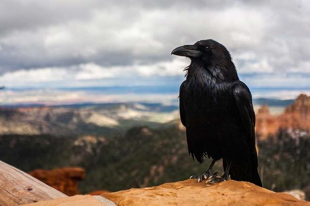 Crow Raven Bird (Public Domain)
