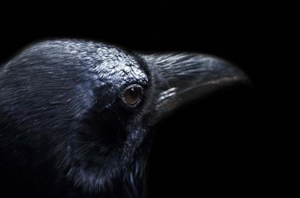 Crows and ravens have not always been seen in a negative light