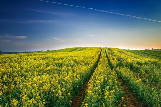 Cultivated field in Masuria. (ysuel / Adobe stock)