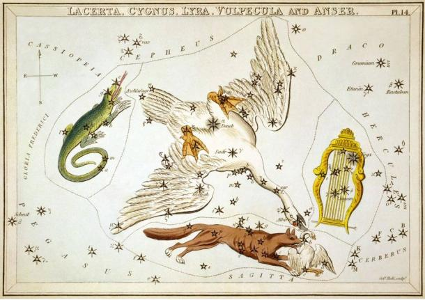 Cygnus the Swan c.1825. Surrounding it are Lacerta, Vulpecula and Lyra.