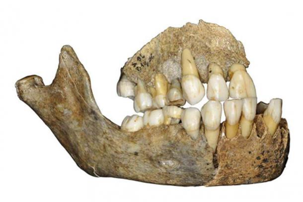 DNA was taken from this Neanderthal jawbone found in Scladina Cave in Belgium. (J. Eloy, AWEM, Archéologie andennaise)
