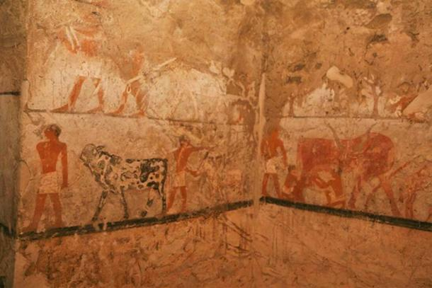 Daily activities depicted in the artwork of the tomb. (Egyptian Ministry of Antiquities)
