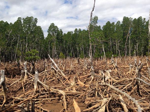 Deforestation has a major environmental impact. (Cunningchrisw / CC BY-SA 4.0)