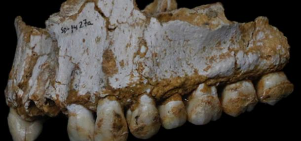 Dental calculus deposits show this Neadertal was eating poplar, a source of aspirin, and moulded vegetation including Penicillium fungus, source of a natural antibiotic. Paleoanthropology Group MNCN-CSIC, Author provided