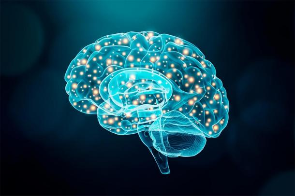 Depiction of the human brain illuminated showing neuronal activity. (Matthieu  / Adobe stock)