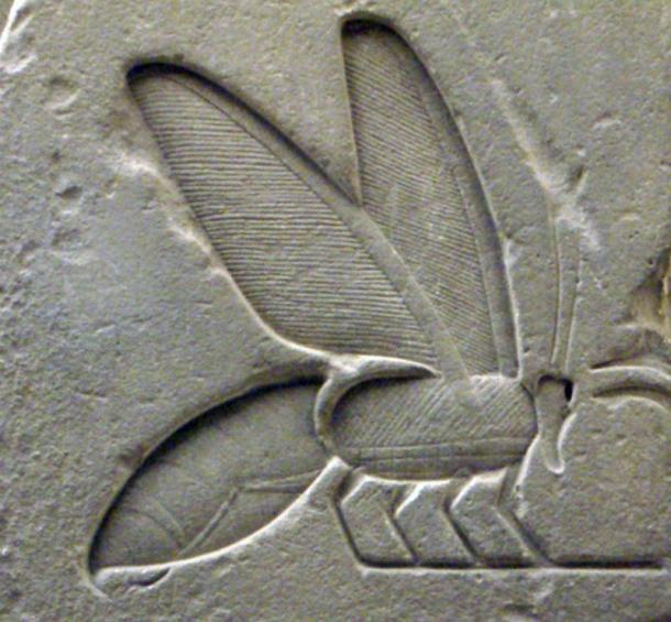 Detail of a bee hieroglyph from the tomb complex of Senusret I