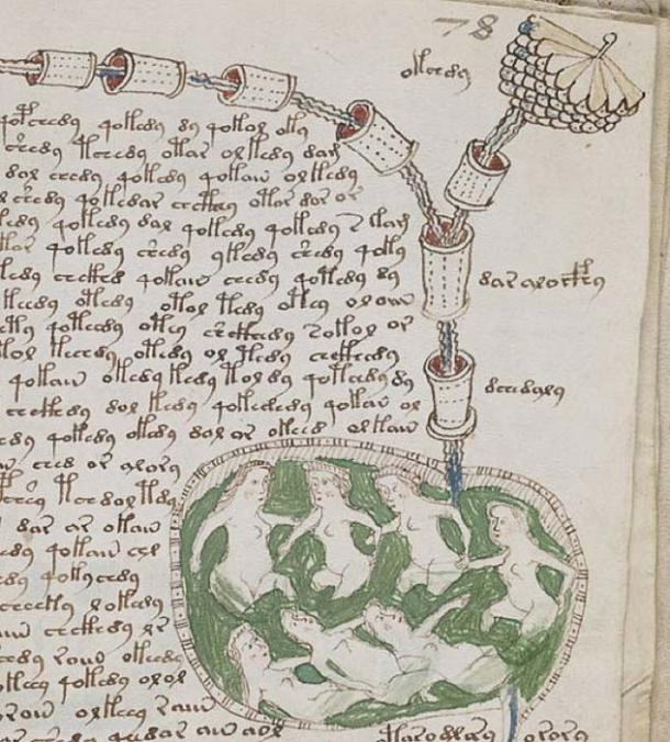 """Detail of an unidentified plant on page 78r of Voynich manuscript, in a part of the text which has become known as the """"biological"""" section. (Public Domain)"""
