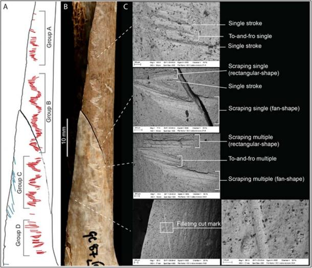Details of the incisions on the engraved human bone.