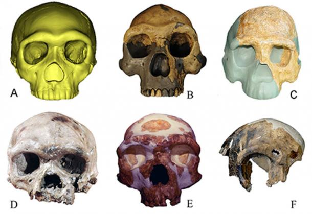 Different types of ancient human fossils in contrast: A. Human fossil from Hualongdong Cave B. Peking Man fossil from Zhoukoudian site C. Fossil of Nanjing Homo erectus D. Human fossil found at the Dali Man site E. Human fossil found at Jinniushan Site F. Fossil of Maba Man. (Wu Xiujie)