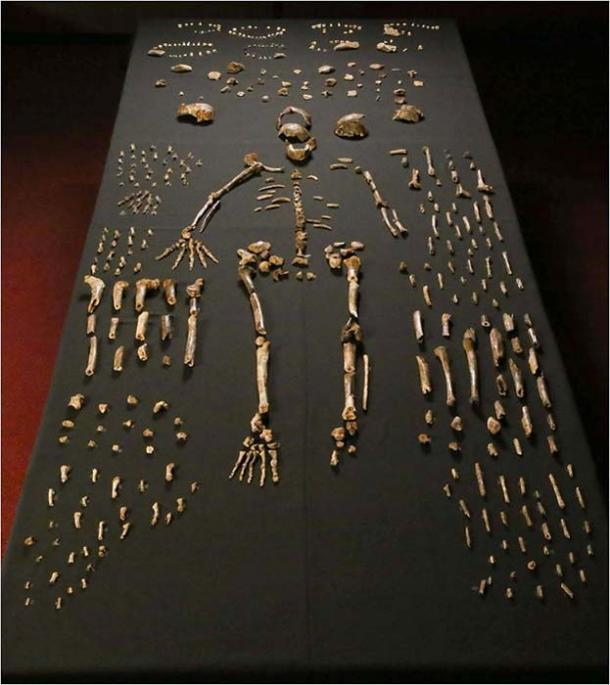 Dinaledi skeletal specimens.