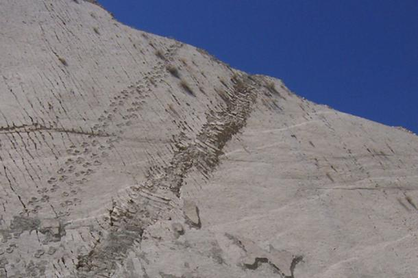 Dinosaur tracks and a disturbed section of the wall.