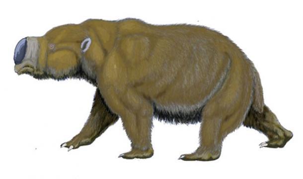 Diprotodon optatum – a giant marsupial from Pleistocene of Australia. (Dmitry Bogdanov/CC BY 3.0)