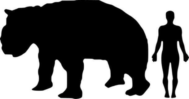 Diprotodon size compared to a human. (Public Domain)