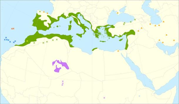 Distribution map of the Olive tree.